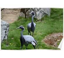 Two Demoiselle Cranes Poster