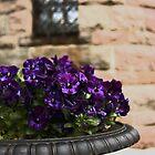 Blue-purple Pansies by AMGunn