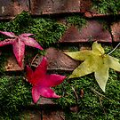 Autumn Leaves by Patricia Jacobs CPAGB LRPS BPE3