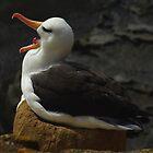 It's hard being an Albatross... by SwampDogPhoto