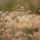 Lakeside plants by lauracronin