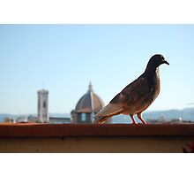 Florentine Scavenger Photographic Print