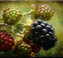 Blackberries On Canvas by Crista Peacey