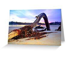Driftwood on Scamander Beach  Tasmania Greeting Card