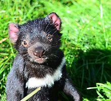 Tasmanian Devil by MisticEye