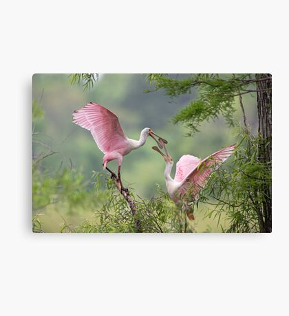 Clacking Bills Canvas Print