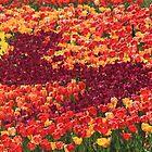 Garden Of Color by Gene Praag