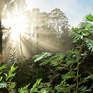 Sunbeams in the Bush  Tasmania by MisticEye