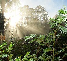 Sunbeams in the Bush  Tasmania by MisticEye