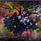 B.C's Oregon Grape by Crista Peacey