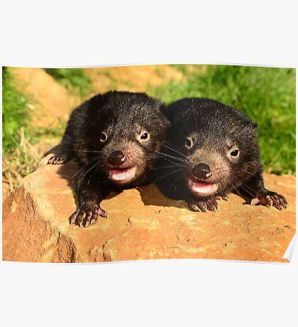 Baby Devils  Tasmania Poster