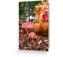 Mr Roo & the Funky Fungii ~ Greeting Card
