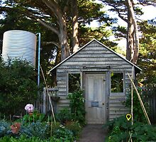 Garden Shed - Churchill Island Historic Gardens by Marilyn Harris