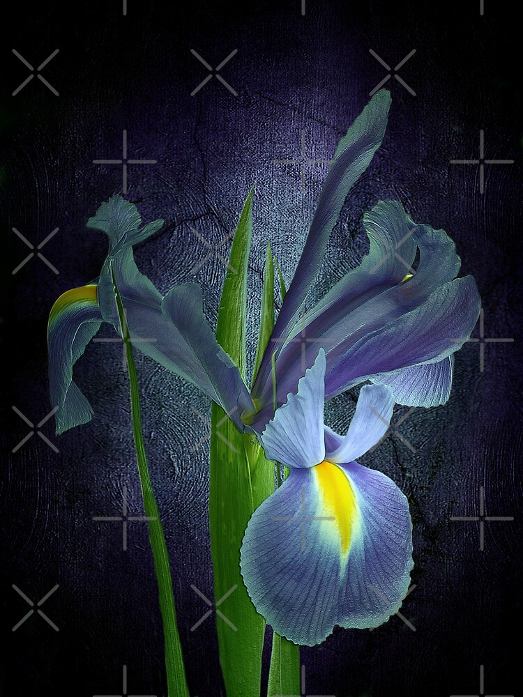 Blue Iris by EbyArts