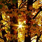 Looking Through The Autumn Leaves by Gabrielle  Lees