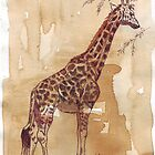 Coffee Art - Paintings done with coffee by Maree Clarkson by Maree  Clarkson