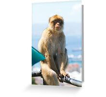 Barbary Macaque In Gibraltar on watch! Greeting Card