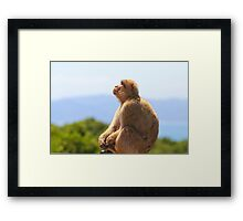 Barbary Macaque plane spotting In Gibraltar Framed Print