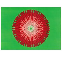 Red on bright green Picasso Kalaeidoscope Photographic Print