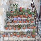 Cactus Garden, Mission, Santa Barbara by Jennifer Mosher