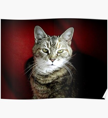 A cat in her golden years Poster