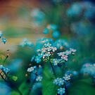 Forget Me Not by Laura Williams