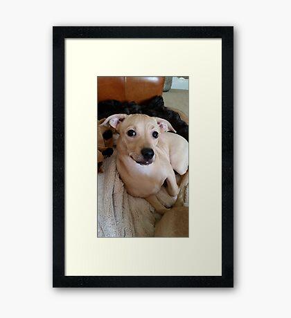Pretty Posing Puppy Framed Print