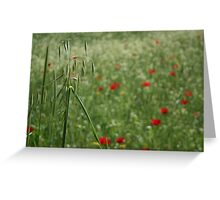 Seed Head With A Beautiful Blur of Poppies Background  Greeting Card