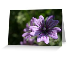 Mauve Mallow Greeting Card