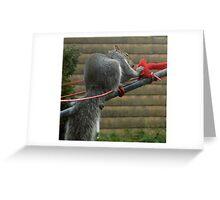 Washing line squirrel Greeting Card