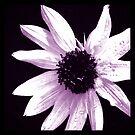 Sunflower by Artondra Hall