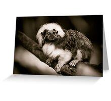 Cotton Top Tamarin Greeting Card