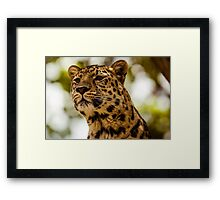Leopard on High Alert Framed Print