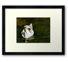 Mute Swan on Sparkling River Framed Print