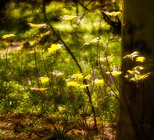 Golden Evening Woodland Leaves by mlphoto