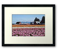 Tulip Town, Skagit Valley, Washington Framed Print