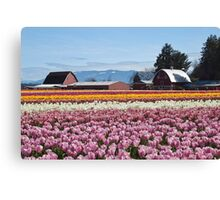 Tulip Town, Skagit Valley, Washington Canvas Print