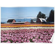 Tulip Town, Skagit Valley, Washington Poster