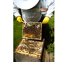Bee Keeping in England Photographic Print
