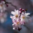 Blossoms in the Sun by Peter O'Hara