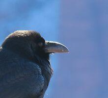 King Raven by Alex Call