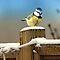 Bird & Animal Friends in the Snow - $20 Voucher