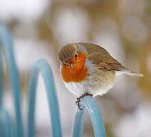 Robin redbreast by Lyn Evans