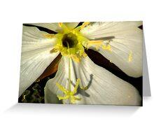 Wild Evening Primrose Greeting Card