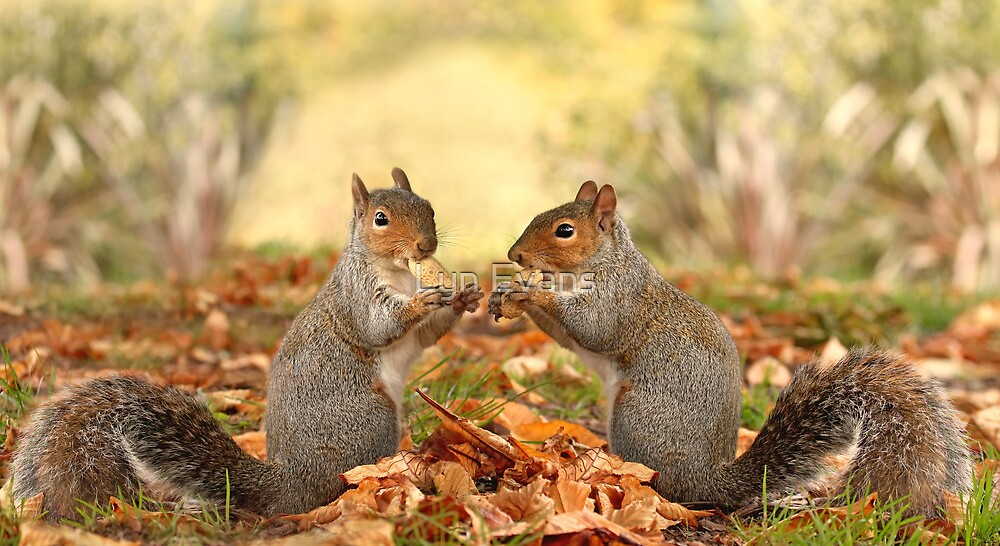 Autumn gathering by Lyn Evans