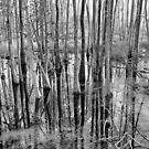 Swamp Trees by Jim Haley