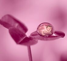 Fairy dew drop by Lyn Evans