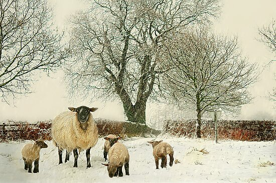 Winter lambs by Lyn Evans
