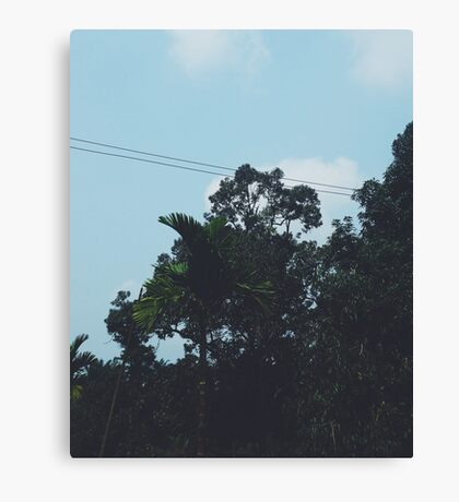 Sky And Trees Canvas Print
