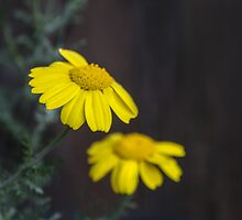 Serenity in Nature by heatherfriedman